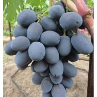Виноград Фуршетный (Средний/Фиолетовый)