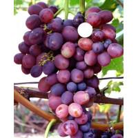 Виноград Лелик (Средний/Фиолетовый)
