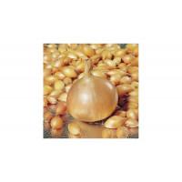 Лук-севок Стурон | Семена